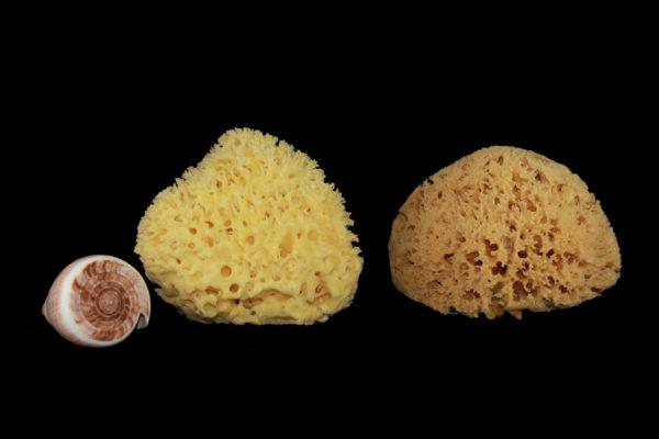 Rosenfeld natural sea sponge