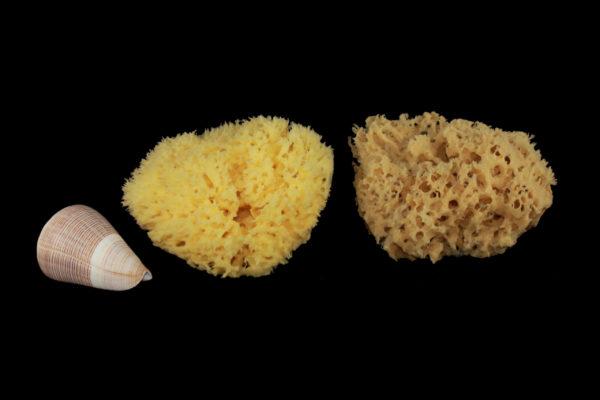 05-rosenfeld-sponge-bath-shower-bc
